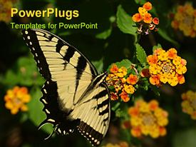 PowerPoint template displaying yellow butterfly w/black markings on yellow and orange flowers in the background.