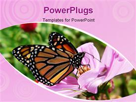 PowerPoint template displaying monarch butterfly in blooming garden