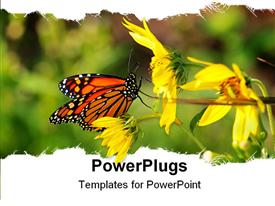 PowerPoint template displaying a beautiful depiction of a butterfly sitting on a sunflower