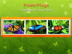 PowerPoint template displaying large butterfly resting on a leaf