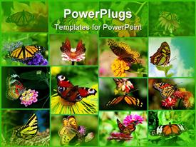 PowerPoint template displaying grid composite of butterflies landing on flowers