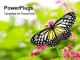 PowerPoint template displaying yellow, white, black butterfly landing on pink flowers