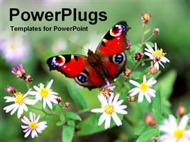 PowerPoint template displaying colorful red butterfly perched on flowers
