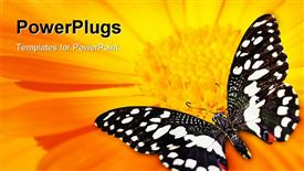 PowerPoint template displaying butterfly sleeping on an orange flower in the background.