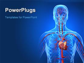 PowerPoint template displaying anatomy depiction of the human cardiovascular system in the background.