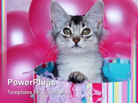 Kitten popping out of a birthday box surrounded by balloons presentation background
