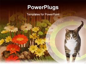 Walking cat template for powerpoint