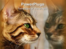 Face of a Bengali kitten staring at her own reflection in a window template for powerpoint