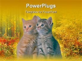 PowerPoint template displaying two tabby kittens leaning on each other in front of autumn background