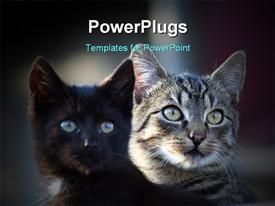 Two cats sitting on the roof and staring powerpoint theme