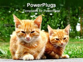 Two fluffy young cats staring at the camera powerpoint design layout