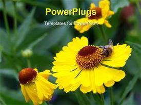 PowerPoint template displaying bee sucking nectar of yellow sunflower in garden