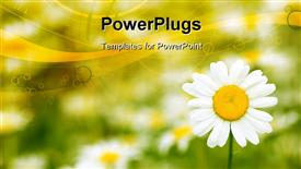 PowerPoint template displaying very beautiful chamomile on a green meadow