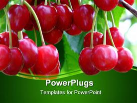 PowerPoint template displaying red ripe cherries on a tree with green background
