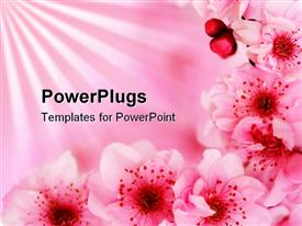 PowerPoint template displaying beautiful pink blossoming cherry flowers on light pink background.