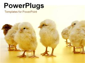 PowerPoint template displaying little chicks