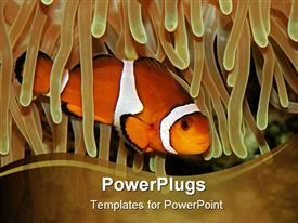 Clown fish and sea anemone powerpoint theme