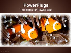 PowerPoint template displaying two orange clown fishes swimming in between tentacles on a brown background