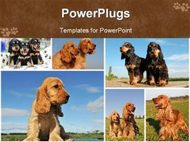 PowerPoint template displaying lots of tiles showing cute puppies playing on grass