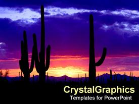 Rich colored sunset of cactus in desert presentation background