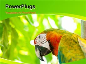PowerPoint template displaying colorful parrot bird sitting on the perch in the background.