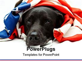 PowerPoint template displaying black Labrador mix wearing US flag