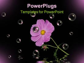 PowerPoint template displaying bright purple cosmos flower on black with bubbles and water reflection in the background.