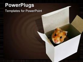 PowerPoint template displaying cute hamster peeking out of white box, ripple background