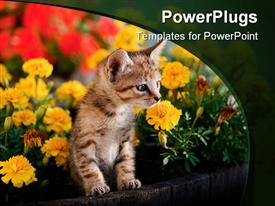 PowerPoint template displaying a kitten wit a number of flowers in te background