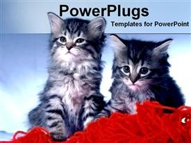 PowerPoint template displaying two black and white cats on loose red wool