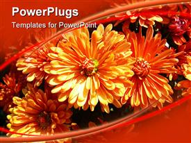 PowerPoint template displaying cute orange colored flowers grows together
