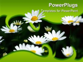 PowerPoint template displaying close-up of fresh daisies sprouting out of green frame