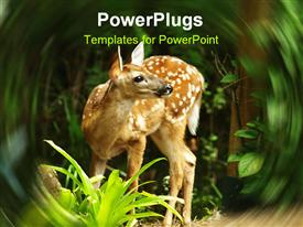 PowerPoint template displaying close up of white tailed deer fawn in the forest with swirled margins