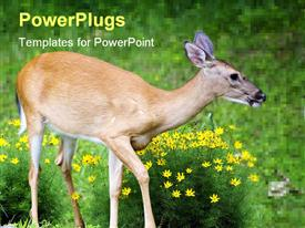 PowerPoint template displaying flowery garden with cute whitetail doe walking through