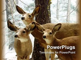 PowerPoint template displaying 3 deer standing together looking at something with snow in the background