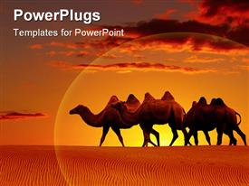 PowerPoint template displaying scenery of desert with camels walking and beautiful sunset in horizon