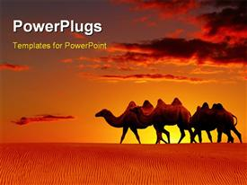 PowerPoint template displaying a group of camels in the desert