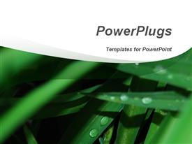 PowerPoint template displaying drops of dew cover leaves of green grass. Ideal for presentations of nature, environment, weather