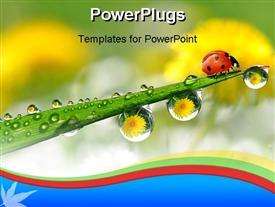 Fresh morning dew and ladybird powerpoint template