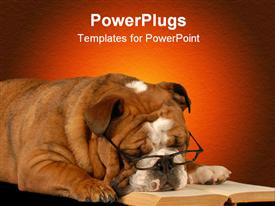 PowerPoint template displaying english bulldog sleeping with reading glasses and a novel in the background.