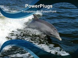PowerPoint template displaying beautiful dolphin swimming in calm blue oceans