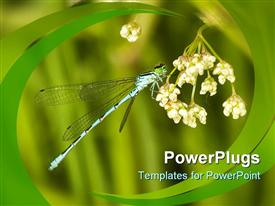 PowerPoint template displaying a dragonfly on a flower with greenish background