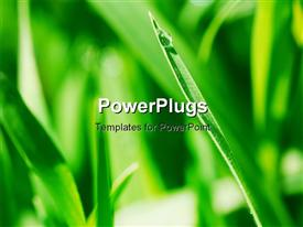 PowerPoint template displaying blade of green grass with rain drop on the tip