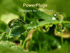 PowerPoint template displaying drops in the grass in the background.