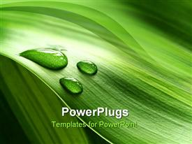 PowerPoint template displaying green plant leaf with clear water drops