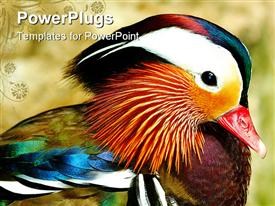 PowerPoint template displaying side view of a exotic mandarin duck. mandarin duck symbolize good faith to lover in orient