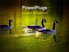 PowerPoint template displaying geese in beautiful colored water