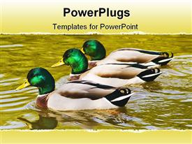 PowerPoint template displaying mallard duck family swimming in the water with golden reflections of autumn trees