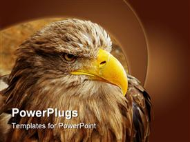 PowerPoint template displaying eagle with yellow beak close up in brown background