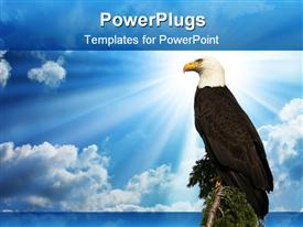 PowerPoint template displaying a hawk sitting on a branch of tree with clouds in the background